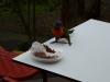 Gieriger Vogel 1