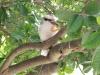 Gieriger Vogel 2